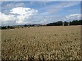 TL0664 : Wheatfield near Swinehead by Les Harvey