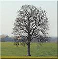 SE4105 : Isolated tree. by Steve  Fareham