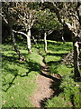 SX1698 : Path entering woodland near West Dizzard by Derek Harper
