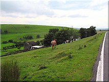 SO1405 : Mount Pleasant Farm with cattle by Jessica Aidley