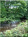 SJ0901 : River Rhiw | Afon Riw by Penny Mayes