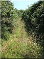SW8556 : Green Lane near Pollamounter by Rob Farrow