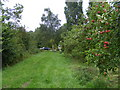 TL2153 : Tempting apples at Valley Farm, Tetworth by David Sands