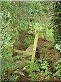 SJ6362 : 2 Stiles and a Footbridge. by David Quinn