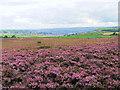 SE0436 : Brow Moor by David Spencer