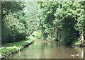 SJ9169 : Macclesfield Canal near Oakgrove, Cheshire by Roger  Kidd