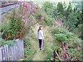 SN7377 : Rheidol Valley by John Lucas