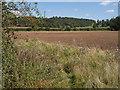ST3624 : Field beside South Drove by Derek Harper