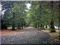 TQ4485 : Avenue of trees in Barking Park by Adrian Cable