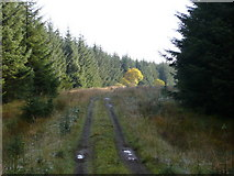 NS5013 : Forestry road by david johnston