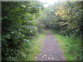 SP8906 : Ridgeway in Hale Wood by Chris Heaton