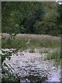 SD6804 : Pond in New Park Wood by C Gallimore