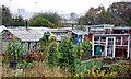 SJ8944 : The Allotments by Debbie Turner