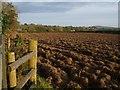 SX2877 : Ploughed field at Trefursdon by Derek Harper