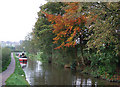 SJ9151 : Caldon Canal below Stockton Brook, Staffordshire by Roger  Kidd