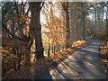 NH6749 : Autumn colours near Kilmuir, Black Isle by sylvia duckworth