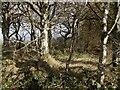 SX2994 : Villaton Plantation by Derek Harper