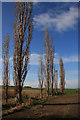 TL2882 : Poplars at Shillhow Barn by Bob Jones