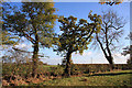TL3086 : Trees near Worlick Farm by Bob Jones