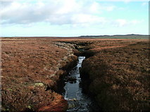 NY9410 : Tributary of Sleightholme Beck by David Brown