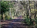 SO8899 : Smestow Valley Nature Walk, Wolverhampton by Roger  Kidd