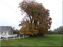 N7950 : Fine autumnal beeches by Jonathan Billinger