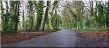 H7240 : Road at Clonleek by Kenneth  Allen