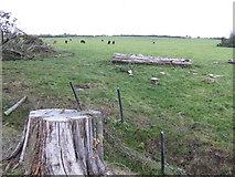 T2048 : Dead pine trees by Jonathan Billinger