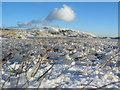 NY4210 : Stony Cove Ice Formations by William Bartlett