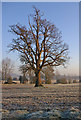 TQ4957 : Bare tree in winter by Ian Capper