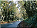 SX1586 : Quiet Lane by Mark Camp