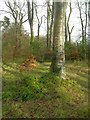 Dist:0.3km<br/>A woodland walk in Castlehill Park, Ayr.  This small woodland is surrounded by housing.