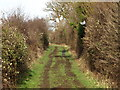 TL0440 : Footpath lined with Hedges by Dennis simpson