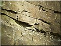 SO5187 : Limestone Exposure (detail) near Munslow, Shropshire by Roger  Kidd