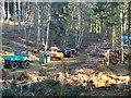 TL1240 : Logging Operation 1 by Dennis simpson