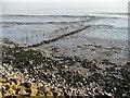 ST3982 : Remains of putcher ranks, Severn Estuary : Week 6