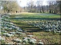 SU1134 : Snowdrops at Holly Cottage, Little Durnford : Week 7