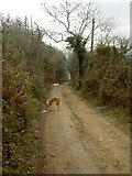 O2715 : Track to Bray Head by David Quinn