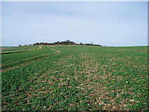 TQ2708 : Arable land on south downs by Peter Holmes