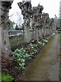 ST6464 : Row of heavily pollarded trees at St Mary's church by Nick Smith