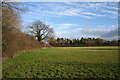 SJ5352 : Pasture and plantation, near Bankhouse Farm by Espresso Addict