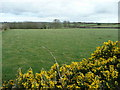 SW9964 : Pastures near Trevidgeowe Farm by Jonathan Billinger