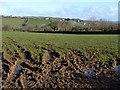 SX2386 : Field at Torrpark by Derek Harper