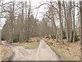 SU8865 : Windsor Ride, Swinley Forest by David Hawgood