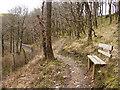 SN7377 : Footpath in Cwm Rheidol by John Lucas