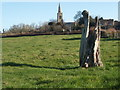 TL1182 : Tree Stump, Great Gidding by Michael Trolove