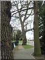 SK6203 : Trees on Goodwood Road, Leicester by Michael Trolove