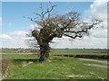 TL1487 : Kenny's Oak by Michael Trolove