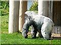ST8143 : Nico the Gorilla, Gorilla Island, Longleat Safari Park, Wiltshire by Brian Robert Marshall