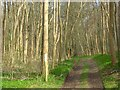 SU8190 : Moor Wood by Andrew Smith